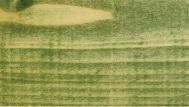 VAZA Green
